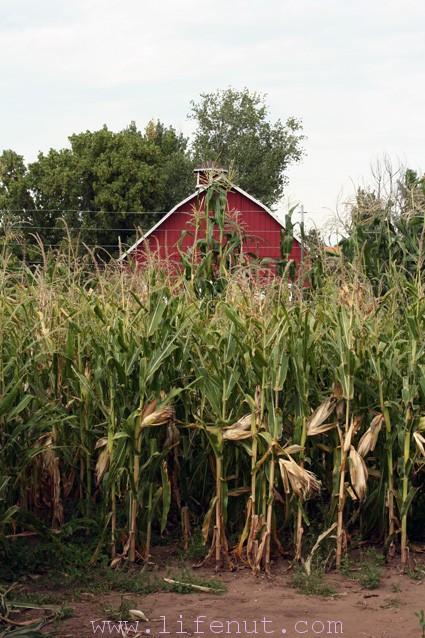 Get lost fall fun at the chatfield corn maze lifenut Chatfield botanic gardens corn maze