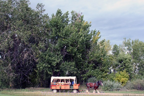 horse-drawn hayride